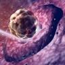Induzione dell'ovulazione e monitoraggio del ciclo